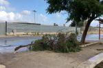 Alberi e rami caduti: ecco gli effetti della notte di vento a Palermo