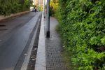 Palermo, alberi non potati e marciapiedi invasi dalle piante: le foto