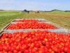 Brexit:agricoltura campana la più colpita da mancato accordo
