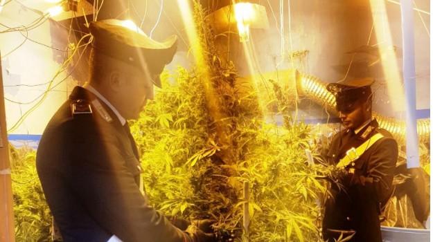 piantagione marijuana palermo, Angelo Ragusa, Palermo, Cronaca