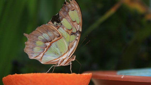 casa delle farfalle palermo, Palermo, Cultura