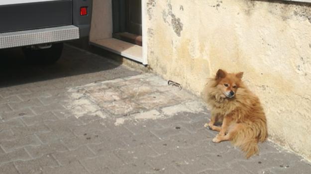 cane aspetta padrone morto, Hachiko, Mazzarino, volpino Mazzarino, Caltanissetta, Cronaca