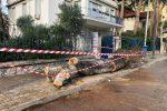Maltempo a Palermo, così è crollato un albero a Mondello - Video