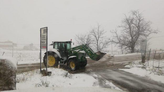 danni agricoltura neve, gelo stato calamità sicilia, neve in sicilia, Edy Bandiera, Sicilia, Cronaca