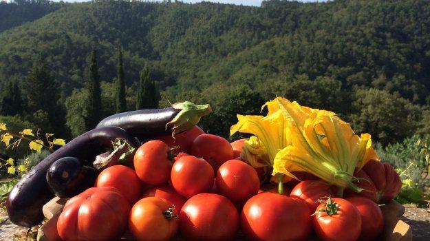 AGRICOLTURA, cia sicilia, Sicilia, Economia
