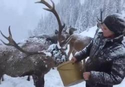 In Austria è ancora emergenza neve: a soffrire anche gli animali del bosco