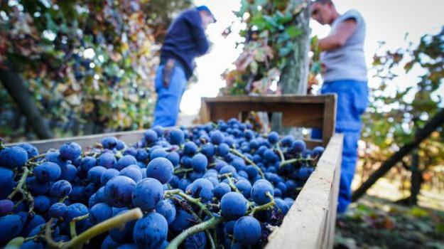 Sicilia, Vino, Sicilia, Economia