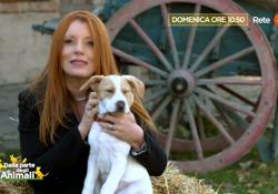 Anche il micio protagonista della rubrica del Corriere nella trasmissione di Michela Vittoria Brambilla in onda domenica mattina