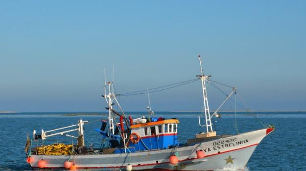 pescherecci, Trapani, Cronaca