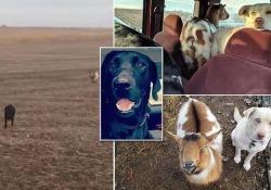 """L'avventura di """"Bo"""" nelle campagne del Kansas"""