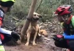 Il cane abbandonato e lasciato al suo destino in un bosco in Portogallo