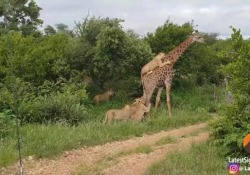 La scena al Kruger National Park, in Sudafrica