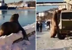 È accaduto a Petropavlovsk-Kamcatski in Russia