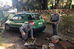 Palermo, sequestrati a Ballarò 140 cardellini: liberati all'interno del parco d'Orleans