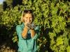 """Vino: a Lungarotti la certificazione sostenibile """"Viva"""""""