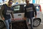 Sequestrati 800 ricci nel Ragusano: scatta una multa da 4.000 euro