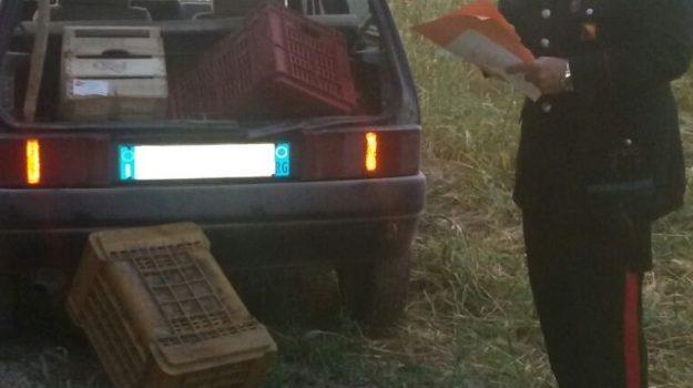 furto melanzane siracusa, AngeloInnorcia, Siracusa, Cronaca