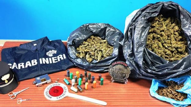 marijuana catania, Daniele Pepe, Orazio Pepe, Catania, Cronaca