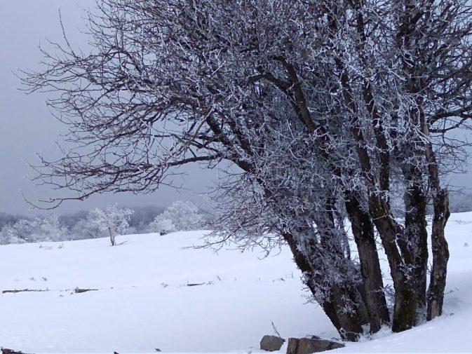 Neve In Sicilia Le Foto Della Passeggiata Bianca Sui Nebrodi