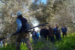 Imparare l'arte della potatura degli olivi: giornata nei campi e consegna dei diplomi a Palermo