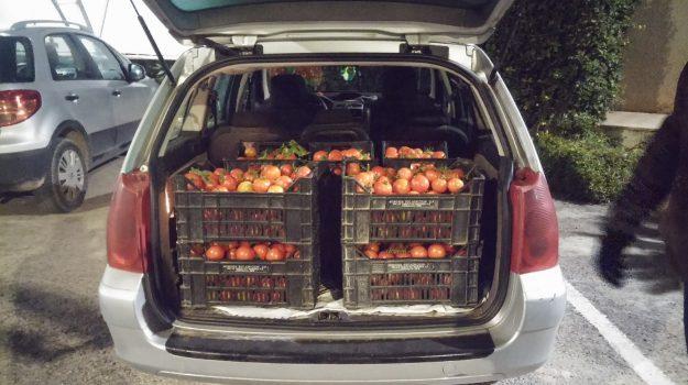 Modica, ruba 180 chili di pomodori da una serra: arrestato