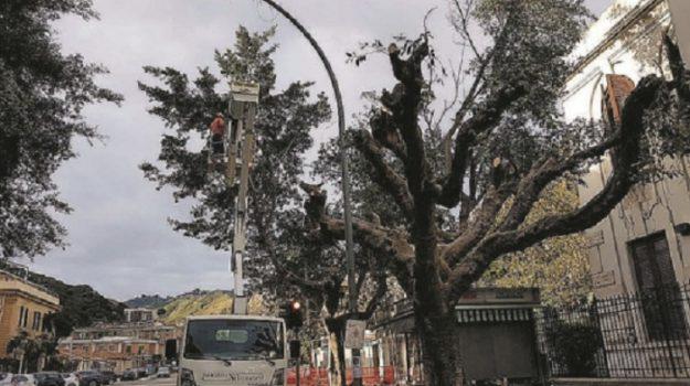 potature alberi messina, Messina, Cronaca