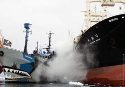 L'ex baleniera che oggi dà la caccia ai balenieri si prepara a partire da La Spezia per una nuova missione. È la veterana delle campagne: «Noi la chiamiamo la Gloriosa»