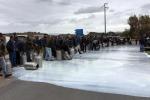 """La protesta degli allevatori siciliani: """"Venerdì sverseremo 3mila litri di latte a Poggioreale"""""""