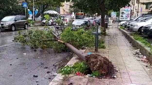 Forte vento atteso a Palermo, chiuse ville e giardini