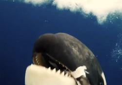 Il filmato è utile per studiare i cetacei