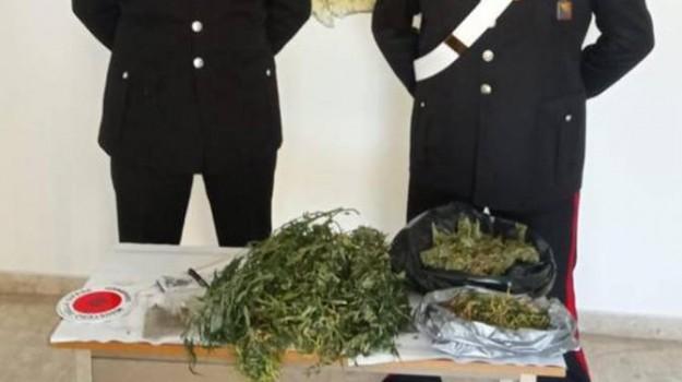marijuana petrosino, Trapani, Cronaca