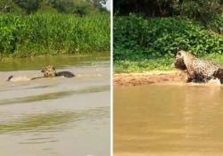 Il filmato ripreso su un fiume in Brasile