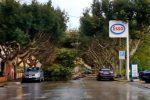Alberi caduti a Ragusa, foto Facebook