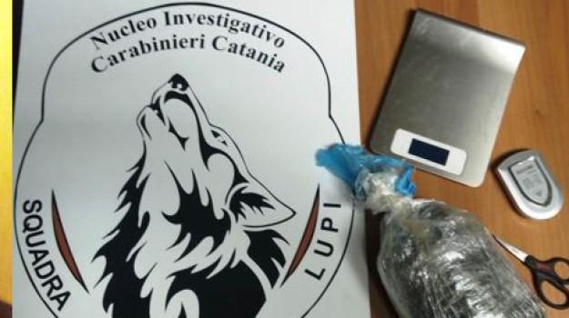 marijuana aci catena, Orazio Sardo, Catania, Cronaca