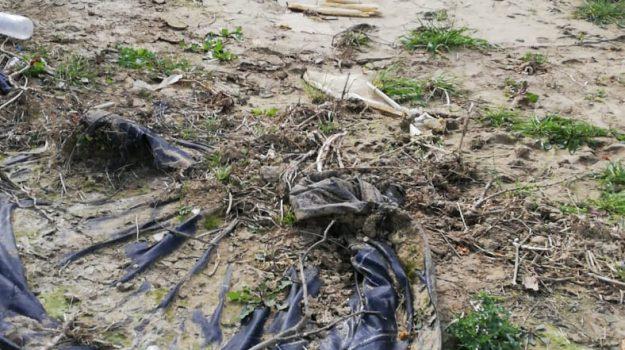 alluvioni, Maltempo, stato di calamità, Caltanissetta, Trapani, Politica