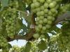 Coldiretti Marche, +424% export agroalimentare Cina 10 anni