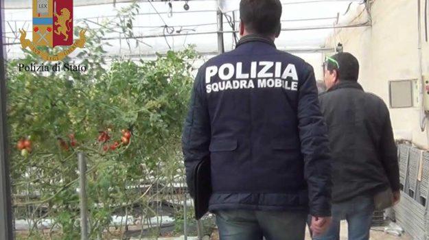 caporalato, videosorveglianza, Nello Musumeci, Sicilia, Politica
