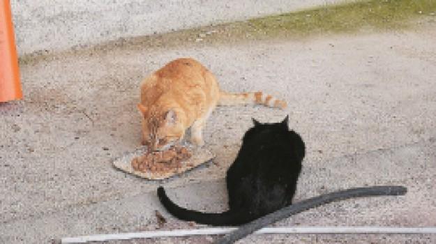 avvelenamento gatti a Sciacca, gatti avvelenati, procura, Agrigento, Cronaca