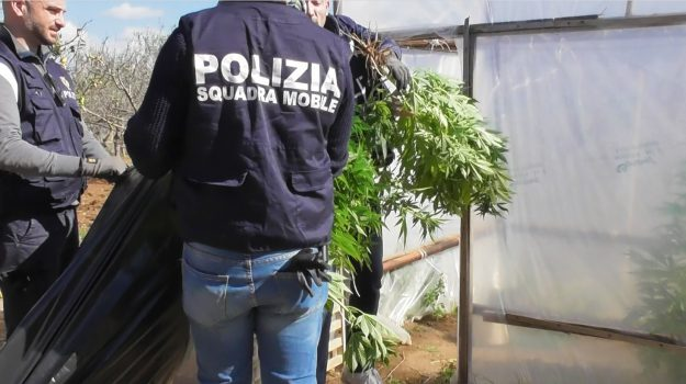droga, Vittoria, Giovanni Scalia, Mirko Scalia, Ragusa, Cronaca
