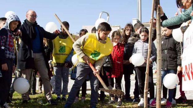 alberi, crowdfunding, legambiente, Catania, Cronaca