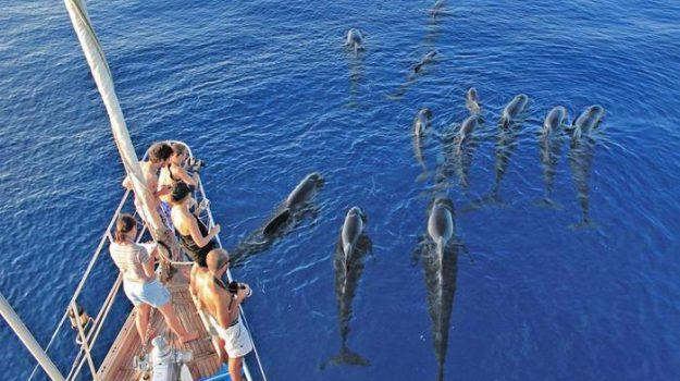 Avvistatore cetacei, lIGURIA, Sicilia, Economia