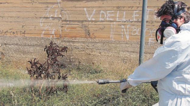 asp, disinfestazione, zanzara tigre, Agrigento, Politica