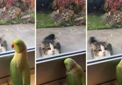 Il pappagallo che gioca a nascondino col gatto O meglio: il pappagallo che vorrebbe giocare a nascondino col gatto - CorriereTV