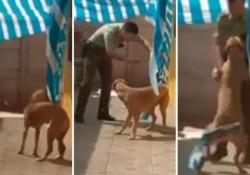Impigliato nel tendone: il poliziotto lo libera e il cane lo ringrazia così. Il video è virale Le immagini sono state  girate in Cile  - Corriere Tv