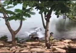 L'enorme coccodrillo agguanta il cagnolino che sta giocando in riva al lago La terrificante sequenza girata nei pressi di un college in Australia - CorriereTV