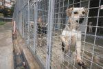 Modica, un branco di cani uccide un vitellino