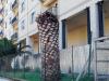 Caltanissetta, assolti gli inquilini di via Puccini: il Comune non reperì altri alloggi