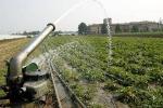 """""""Manca l'acqua per irrigare"""", gli agricoltori di Gela denunciano l'assessorato"""