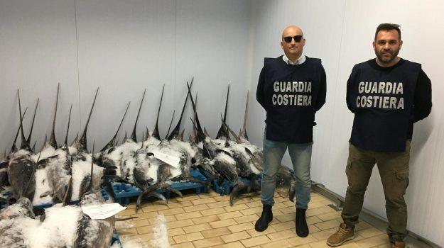 pesce spada, pozzallo, sequestro, Ragusa, Cronaca