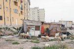 A Siracusa la via Algeri nel degrado: animali tra le baracche nel rione Mazzarrona